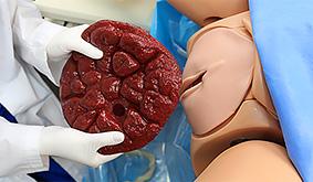 Profissional da área da saúde segurando modelo de placenta incluído no simulador Noelle