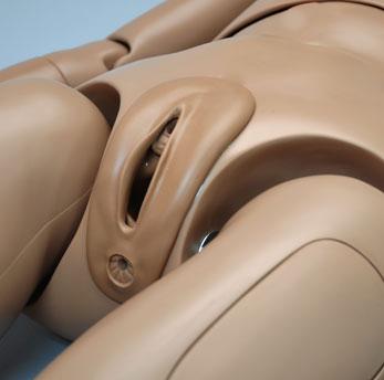 Orgão genital do simulador S206